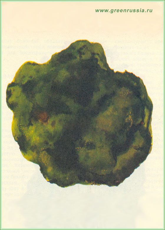 порошок бодяги от пигментных пятен отзывы