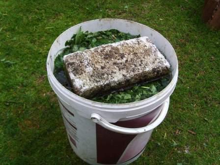 как приготовить подкормки из крапивы для сада и огорода?
