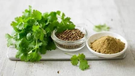 Выращивание кинзы и кориандра