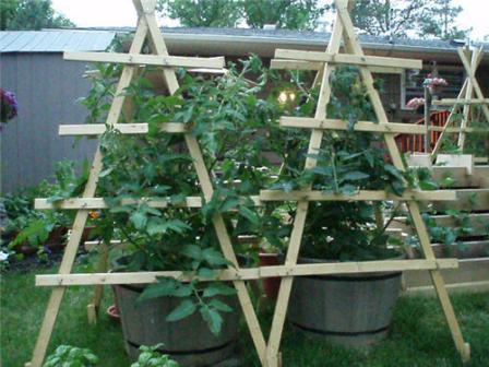 создание шпалер под помидоры: обыкновенные опоры или сложные конструкции
