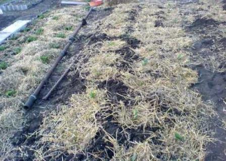 убранная на окраине участка трава может стать полезной для грядок