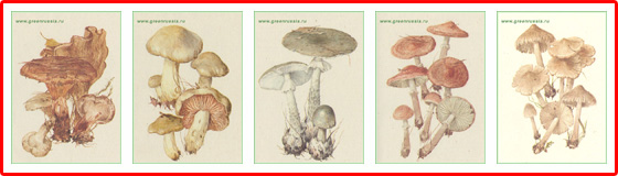 Осторожно: ядовитые грибы!