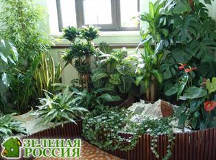 Комнатные лекарственные растения