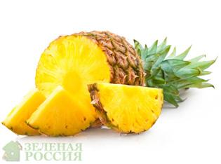 Польза и лечебные свойства ананаса
