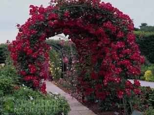 Новейшие идеи использования садовых арок