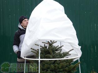 Агрономы начали подготовку к зимнему укрытию растений