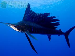 Ихтиологи определили самых быстрых рыб в мире (фото)