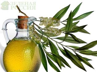 Биологи нашли подарок природы – масло чайного дерева