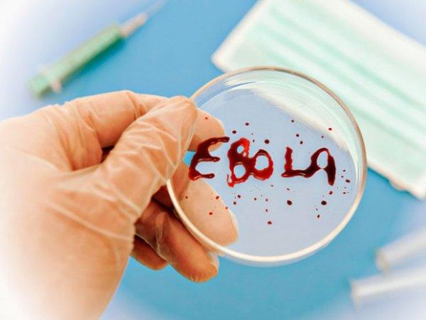 Вирус Эбола может передаваться воздушно-капельным путем