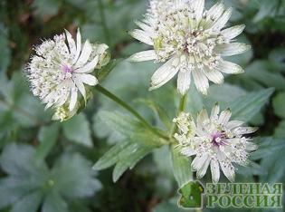 Цветы среда обитания