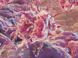 Чтобы победить рак, нужно активировать все звенья иммунной системы