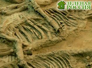 В Якутии нашли самые древние в мире останки скелетных животных