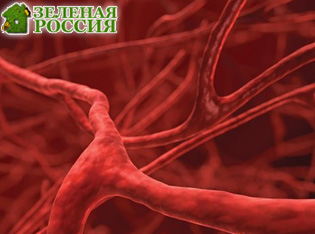 Ученые впервые смогли получить электричество из тока крови