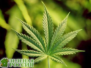 Как марихуана влияет на секс
