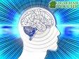 Ученые обнаружили в мозге человека новый вид памяти