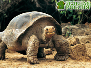 Черепаха весом 68 килограммов сожгла два дома в США