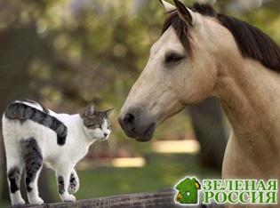 Биологи назвали пять животных, способных лечить людей