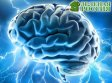 Ученые хотят оживить умерший мозг