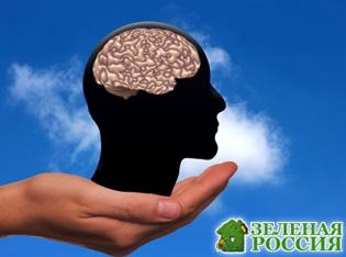 Учёные описали необъяснимый случай жизни мозга после смерти человека
