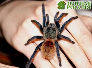Ученые: пауки съедят всех людей за год