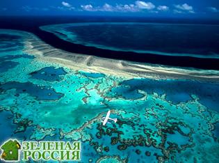 Ученые: Большой Барьерный риф начинает стремительно терять цвет