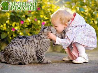 Ученые объяснили опасность объятий с котами