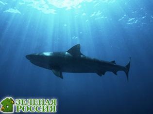 Открыт новый вид акул, светящихся в темноте