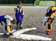 На побережье Аляски обнаружены останки неизвестного морского существа