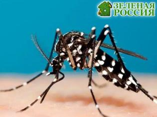 В США против комаров применят бактериологическое оружие
