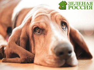 Собаки дорожат прогулкой больше, чем едой и похвалой хозяина