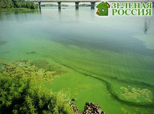 Цветущие водоемы смертельно опасны