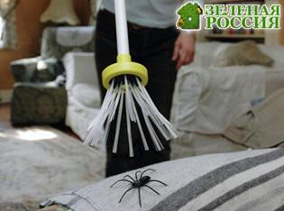 Ученые не советуют убивать в доме пауков