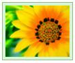 Подобранная коллекция обоев на рабочий стол «цветы»