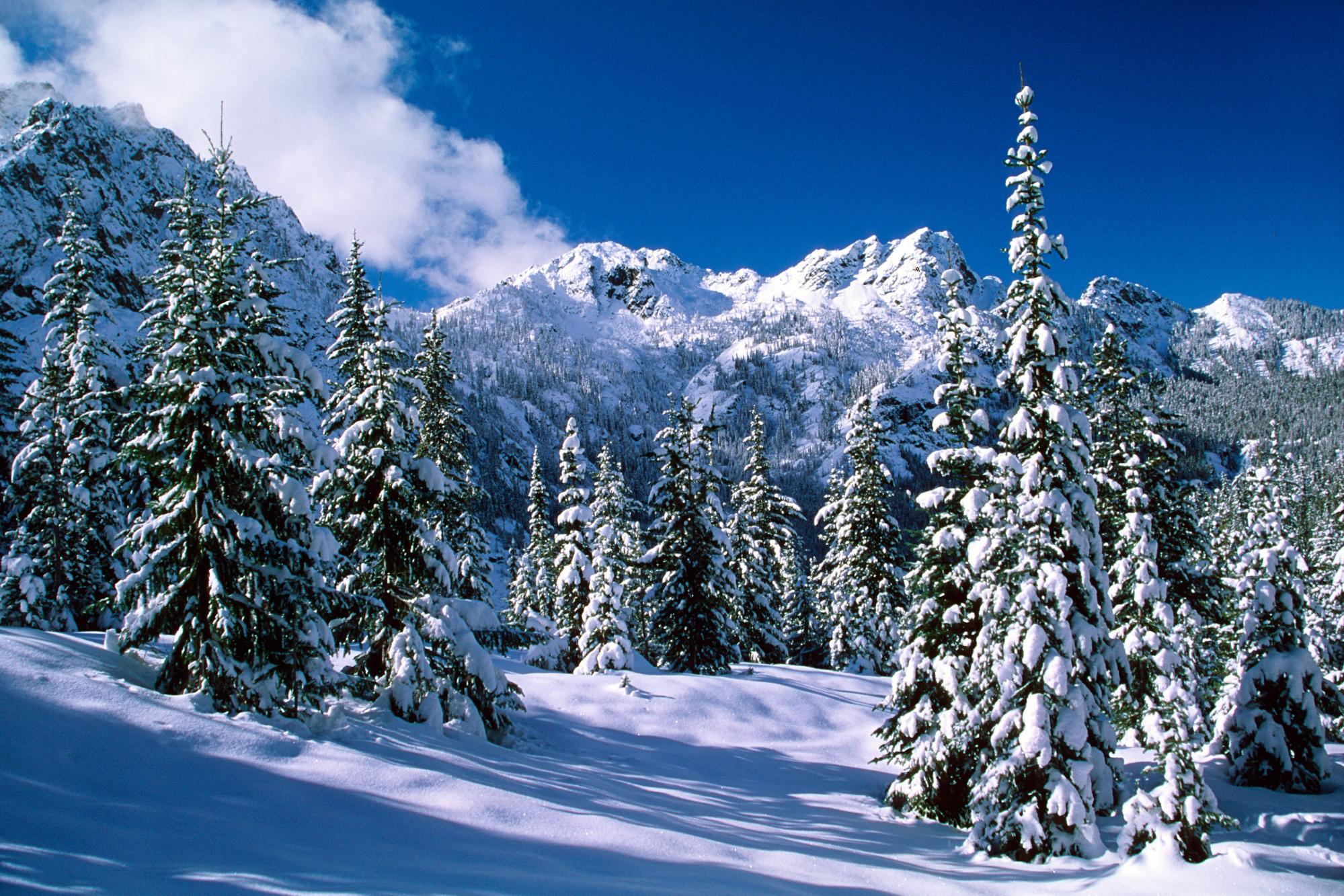 На рабочий стол природа под снегом