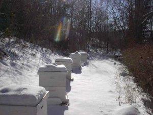 Особенности ухода за пчелами в зимнее время