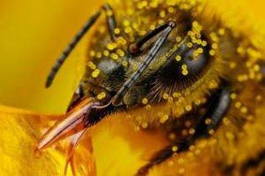 Основные меры, направленные на борьбу с нозематозом пчел