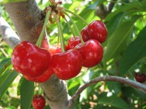 Защита плодовых деревьев от болезней залог высокого урожая