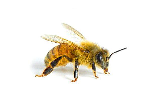 Для пчеловода улья