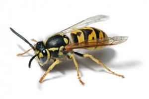 Пчеловодство на даче