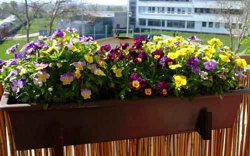Как выбирать балконные растения?