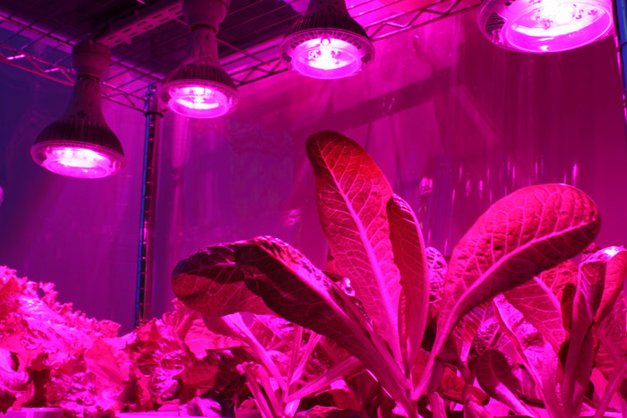 Как приобрести фитолампы для растений?