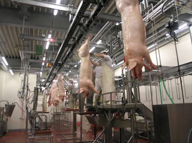 Бойня свиней как готовый бизнес