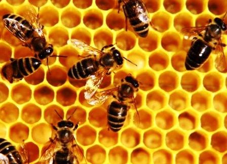 Разведение пчел: с чего начать?