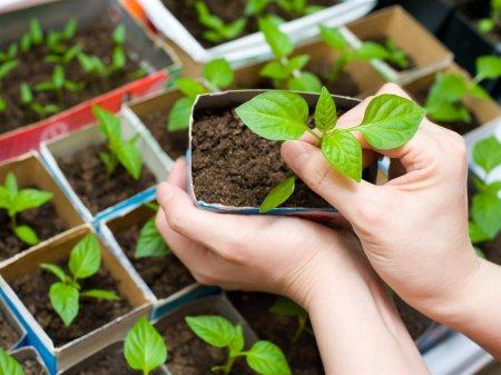 Вырастите богатый урожай