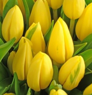 Луковицы цветов оптом