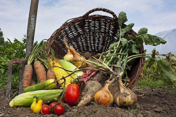Удобрение для хорошего урожая